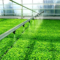 Израелски иновативни технологии во земјоделството